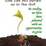seedling sprouting
